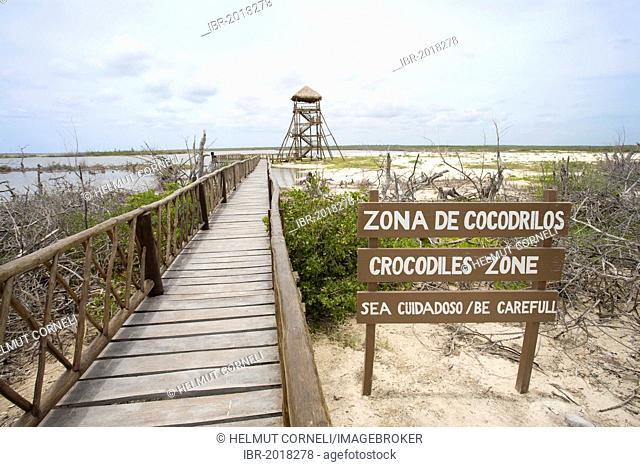 Crocodiles zone, mangroves, Punta Sur, in the south of Cozumel, Mexico, Caribbean