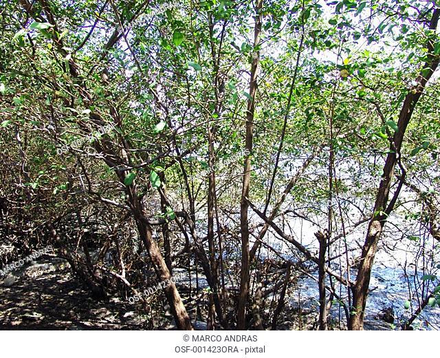 pernambuco trees vegetation