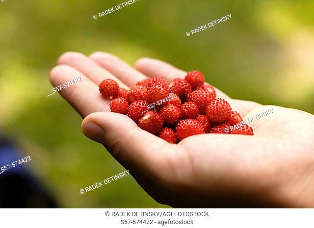 handfull of wild strawberries