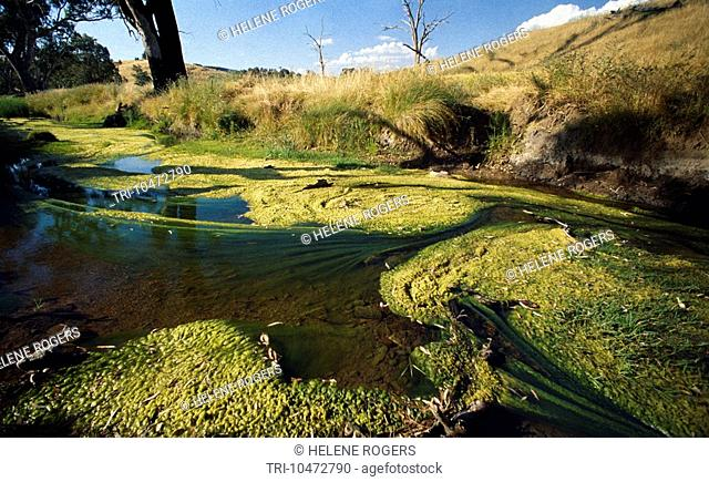 New South Wales Australia Murga - Algae Polluted Water