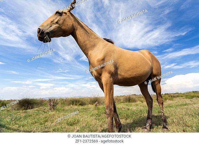 Horse in Llobregat delta,El Prat
