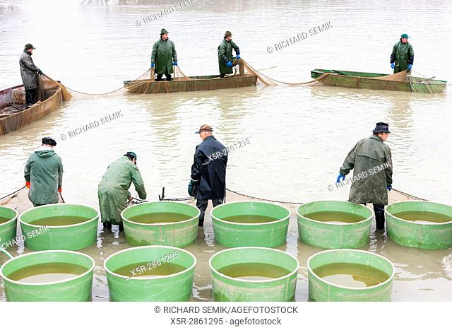fishermen at harvesting pond, Czech Republic