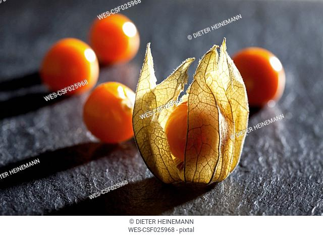Physalis on slate