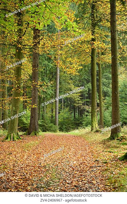 A new little trail going through the forest in autumn