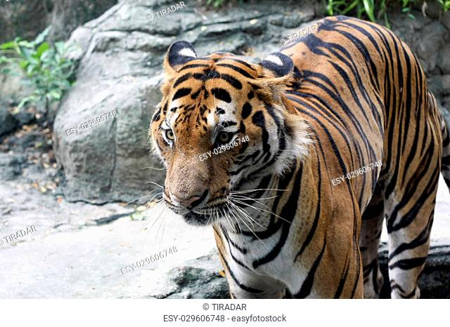 Dusit Zoo at Khao Din Park is a city zoo in Bangkok, Thailand