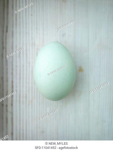 One blue duck egg