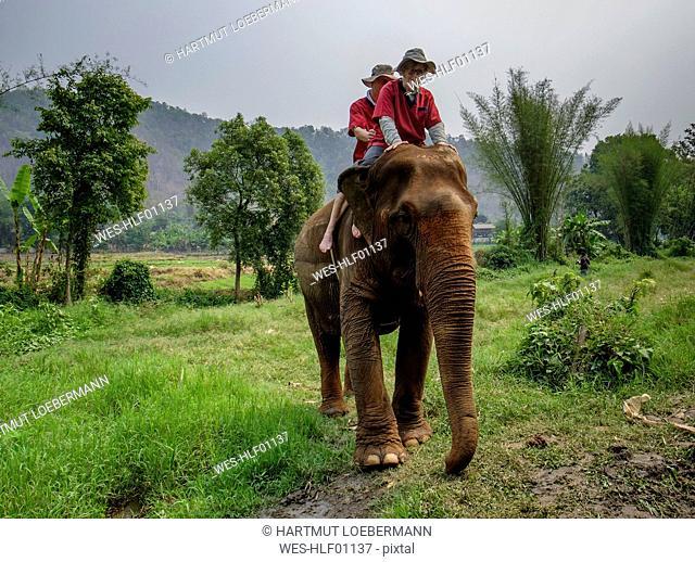 Thailand, Chiang Mai province, Ran Tong Elephant Sanctuary, Elephant trekking