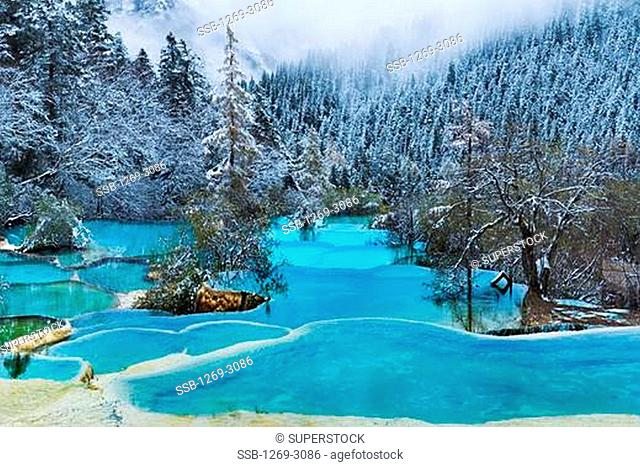 Frost covered trees along a stream, Zheng Yan, Huanglong, Sichuan Province, China