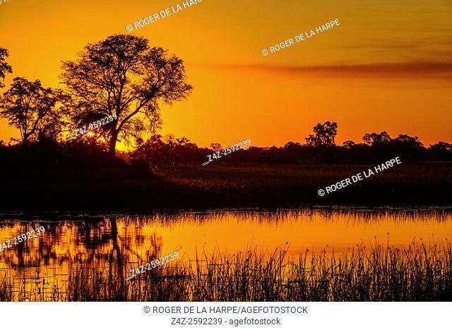 Okavango Delta sunset. Botswana