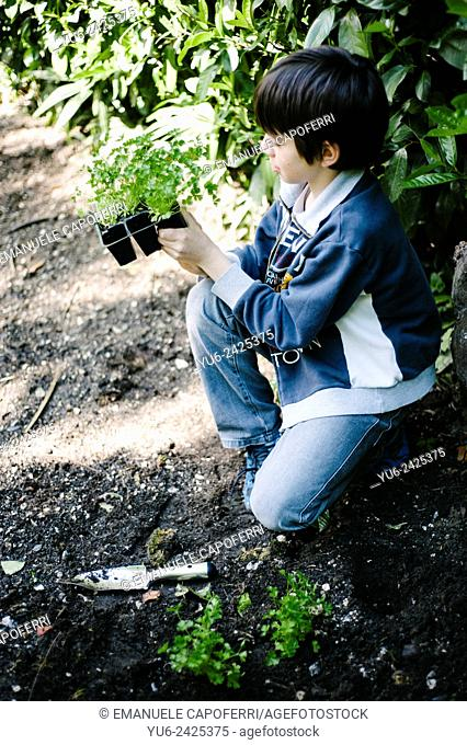 Child with vegetable seedling in hand, preparation of the garden home
