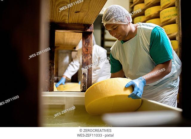 Cheese factory worker putting cheese into salt bath