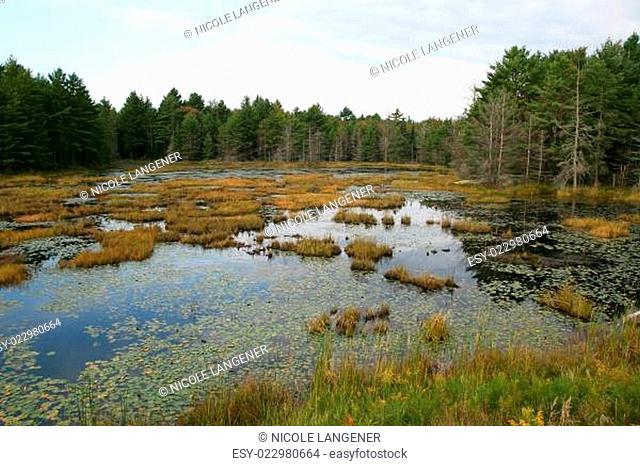Sumpflandschaft Kanada