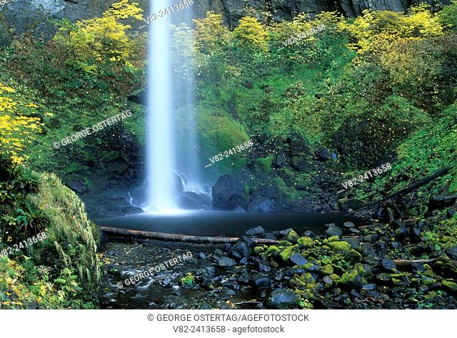 Elowah Falls, Yeon State Park, Columbia River Gorge National Scenic Area, Oregon