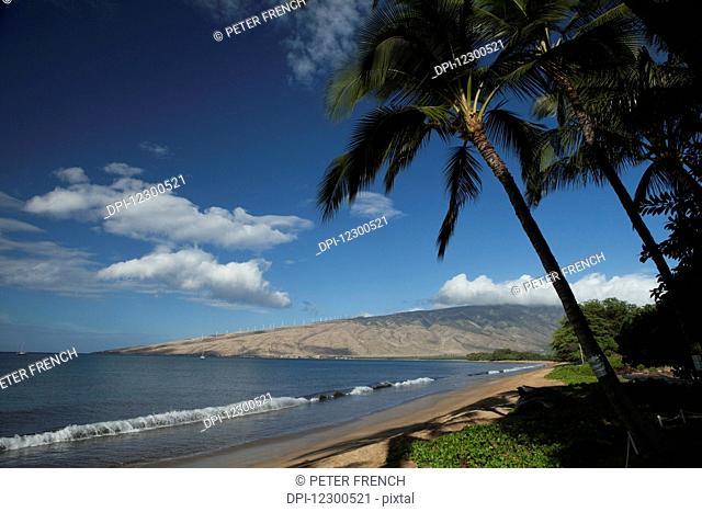 Sugar beach, coconut trees, Maalia and West Maui Mountains in the distance; Maui, Hawaii, United States of America