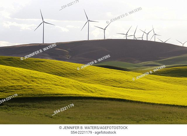 A windmill farm in the Palouse farming area in Whitman County, Eastern Washington, USA