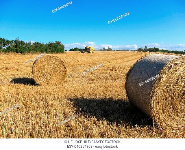 Round straw bales in harvested fields in France