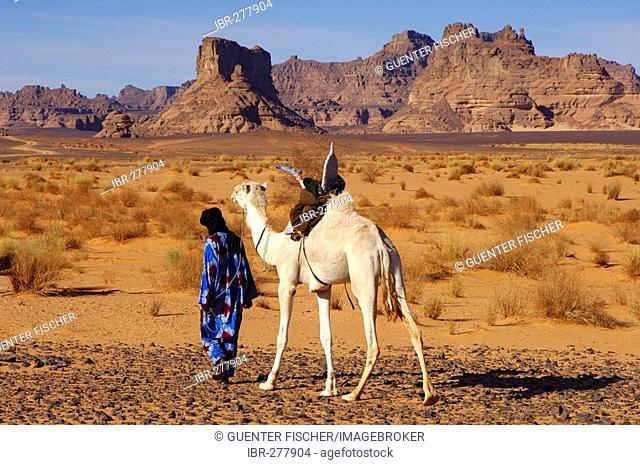 Tuareg nomade with white Mehari dromedary is roaming in the Acacus Mountains, Libya