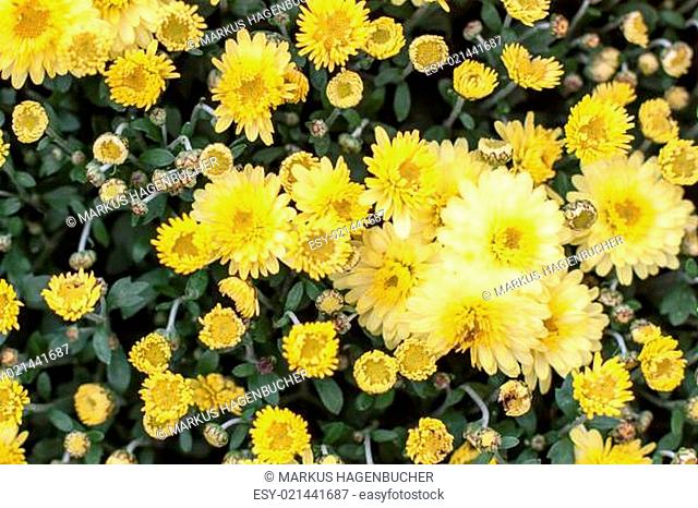 Gelbes Meer