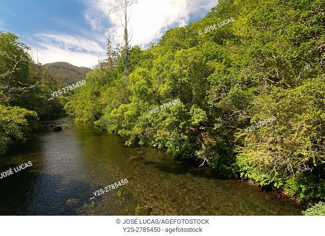 Fragas do Eume Natural Park, Pontedeume, La Coruña province, Region of Galicia, Spain, Europe