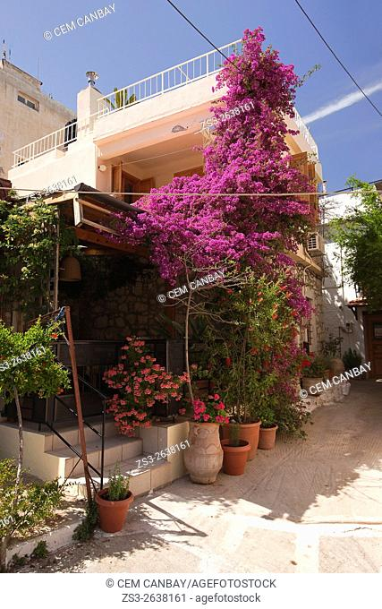 Entrance of a house with bougainvilleas and geranium flowers in Lasithi Region, Crete, Greek Islands, Greece, Europe