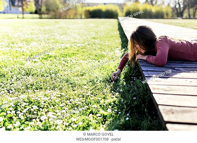 Girl lying on boardwalk picking daisies from a meadow
