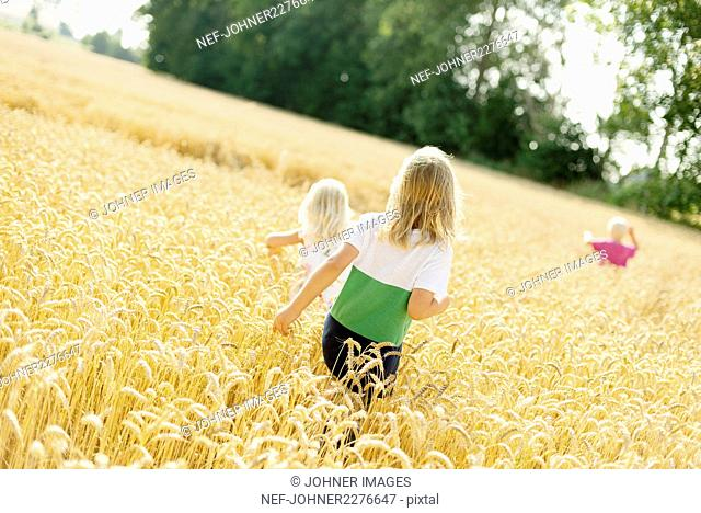 Children walking through wheat field