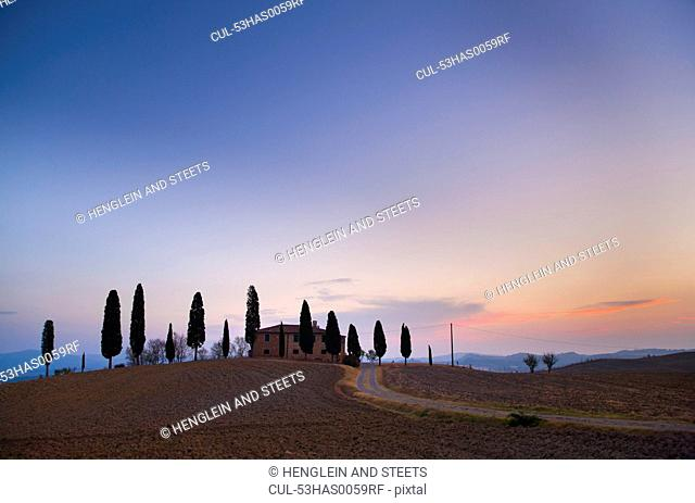 Tuscan cypress trees growing on hill