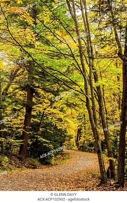Remote country gravel road winding through autumnal hardwoods,Killarney Provincial Park, Ontario, Canada