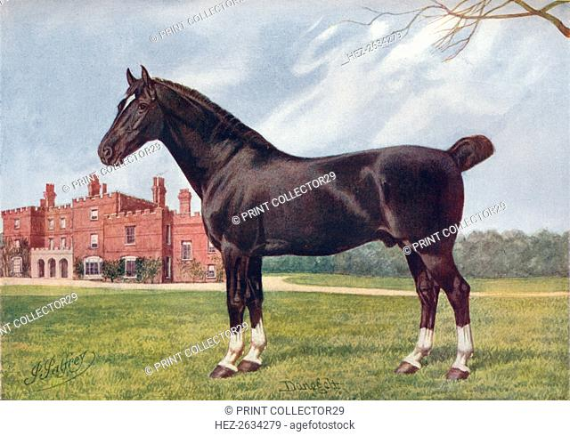 Hackney stallion Danegelt, c1905 (c1910). Artist: Henry Powell Palfrey