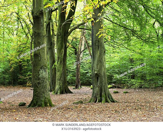 Hirst Wood in early autumn near Saltaire West Yorkshire England