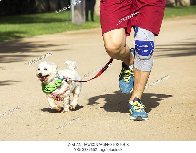 Las Palmas, Gran Canaria, Canary Islands, Spain. 16th December 2018. Fun run for dogs and owners in Las Palmas, the capital of Gran Canaria