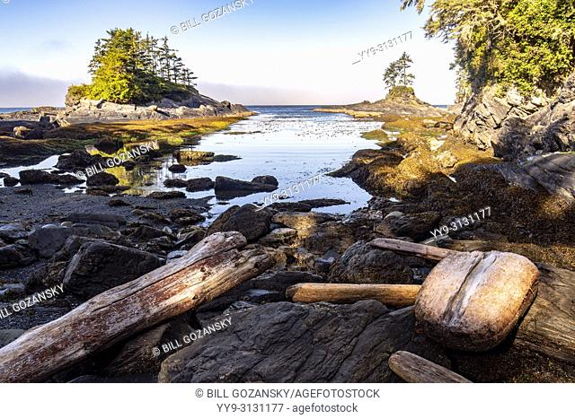 Coastal View at Botanical Beach Provincial Park and Botany Bay - Juan de Fuca Marine Trail - Port Renfrew, Vancouver Island, British Columbia, Canada