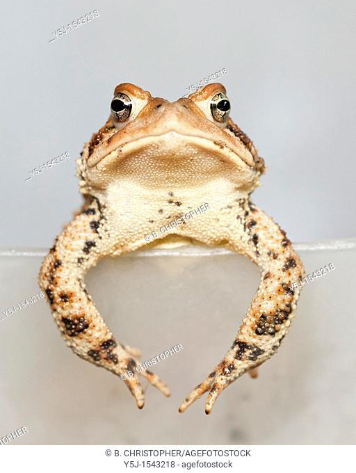 A grumpy toad