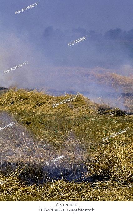 stubble-burning