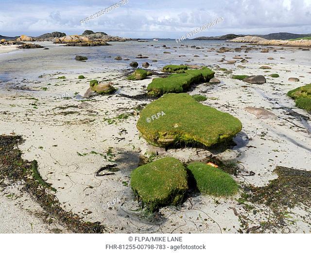 View of sandy beach and algae covered rocks, Fidden, Ross of Mull, Isle of Mull, Inner Hebrides, Scotland, July