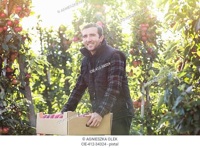 Portrait smiling male farmer harvesting apples in food processing plant