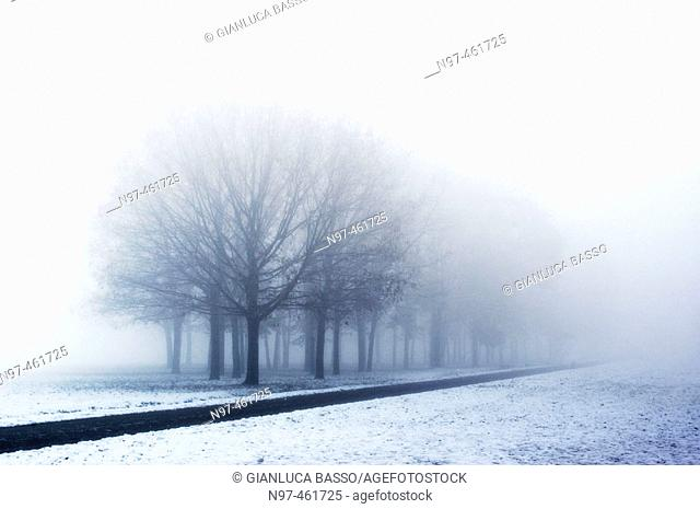 A little street and a line of trees in the Trenno park in Milan in a foggy winter morning after a snowing night
