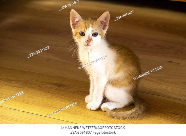 Cute kitten sitting on the floor. on the floor