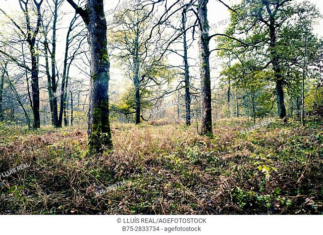 View of the forest with trees. Grass Wood, Grassington, Yorkshire Dales, North Yorkshire, Skipton, UK