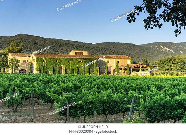 France, Alpes-de-Haute-Provence, Luberon, Domaine Sainte Marie, vineyard, Hotel La Bastide de Marie , Menerbes, Provence