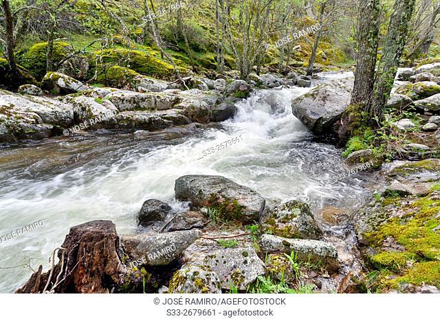 Iruelas river in the Sierra de Gredos. Avila. Castilla Leon. Spain. Europe
