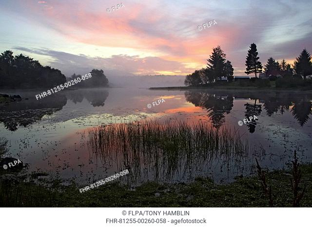 Sunrise over small lochan, at edge of Caledonian Forest, Abernethy Forest, Cairngorms N P , Highlands, Scotland