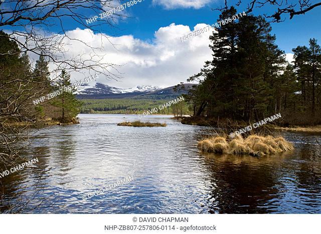 Loch Morlich; Cairngorms; Scotland