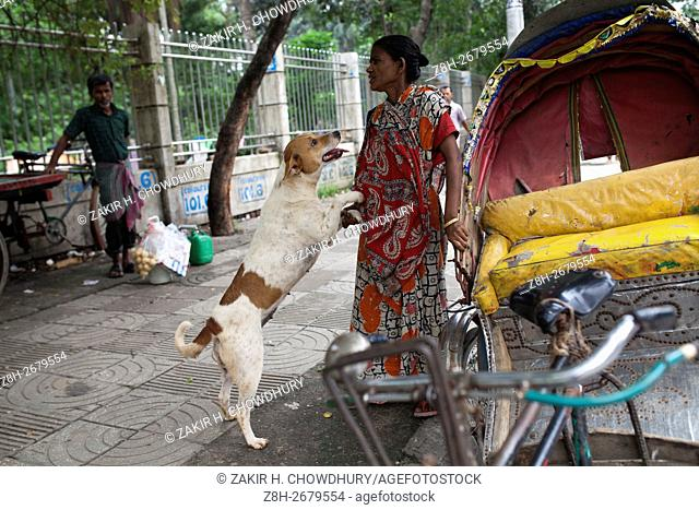 DHAKA, BANGLADESH - JUNE 12 : Rehana a street women take care of this street dog in Dhaka, Bangladesh on June 12, 2016