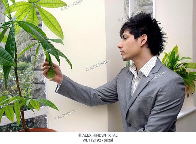 A young business man looking at an office pot plant, contemplating environmental issues