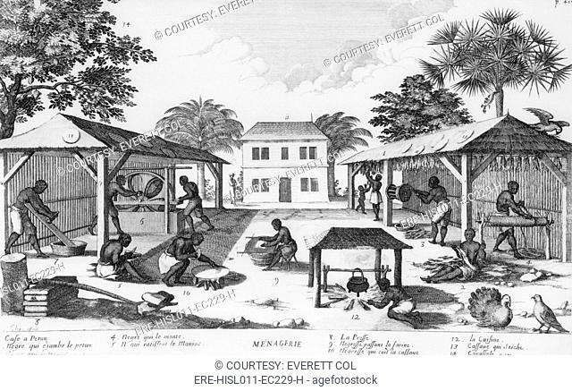 Daily life for enslaved Africans in the Caribbean included curing tobacco, making rope on right, and preparing cassava or manioc roots left and center