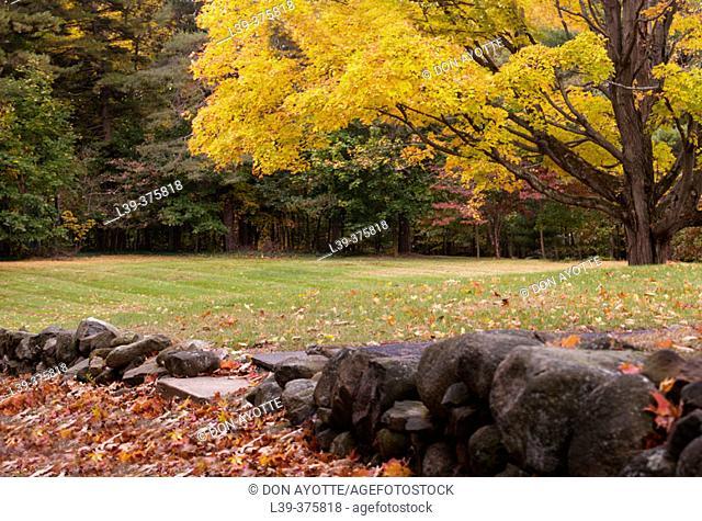 Fall in Hamden. USA