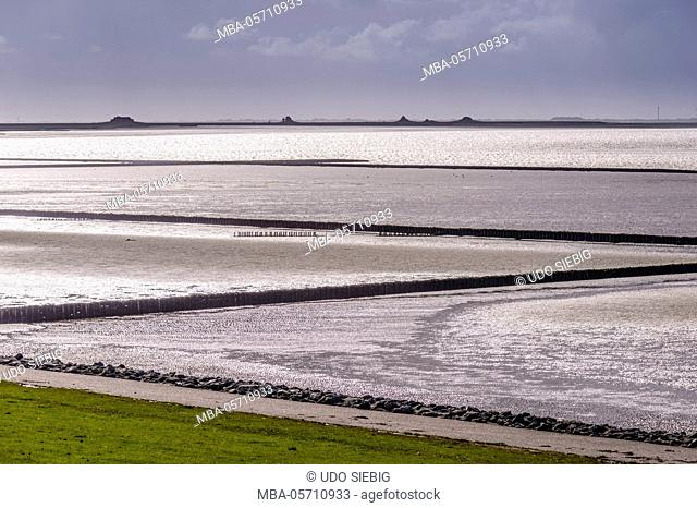 Germany, Schleswig-Holstein, North Frisia, peninsula north beach, mudflat in the Beltringharder Koog, 'Lahnungsfelder' , in the background Hallig...