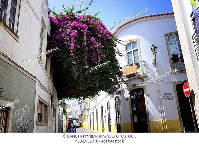 narrow streets in historic part of Lagos city, Bougainvillaea flowering tree, Algarve, Portugal, Europe