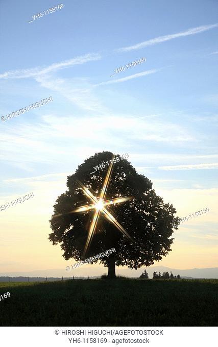 Single tree with sunbeam, Switzerland, Canton Lucerne, Emmental